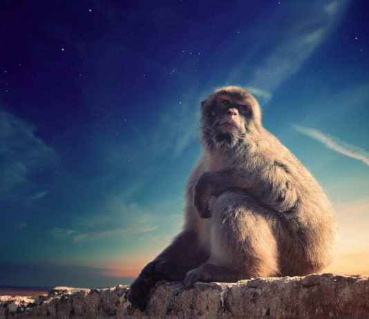 Mengenal Monkey Business Apa itu Monkey Business