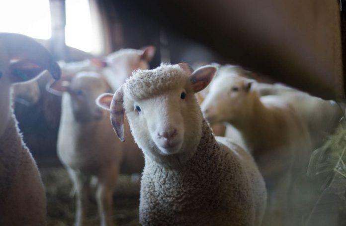 Memanfaatkan Idul Adha Untuk Investasi Hewan Ternak - Investasi Hewan Ternak - strategi bisnis hewan kurban