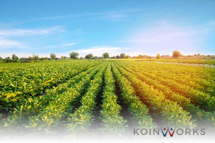 tanah-harga-ladang-kebun-investasi