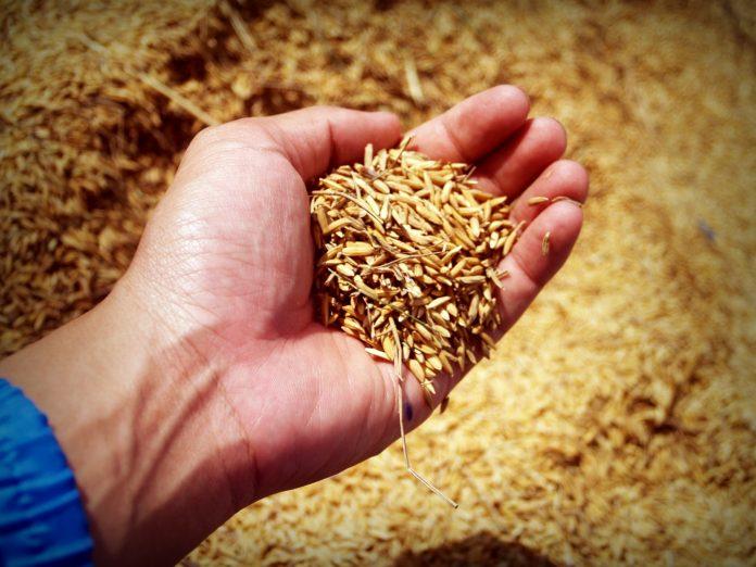 investasi untuk PNS - padi - sawah - pertanian