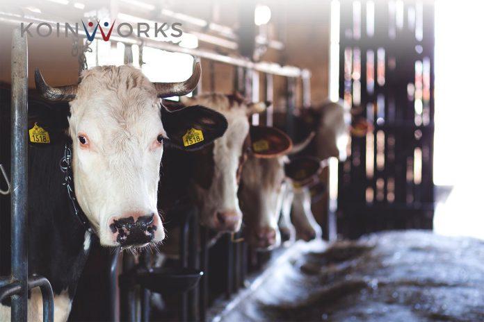 ide bisnis idul adha - hewan kurban - strategi bisnis hewan kurban