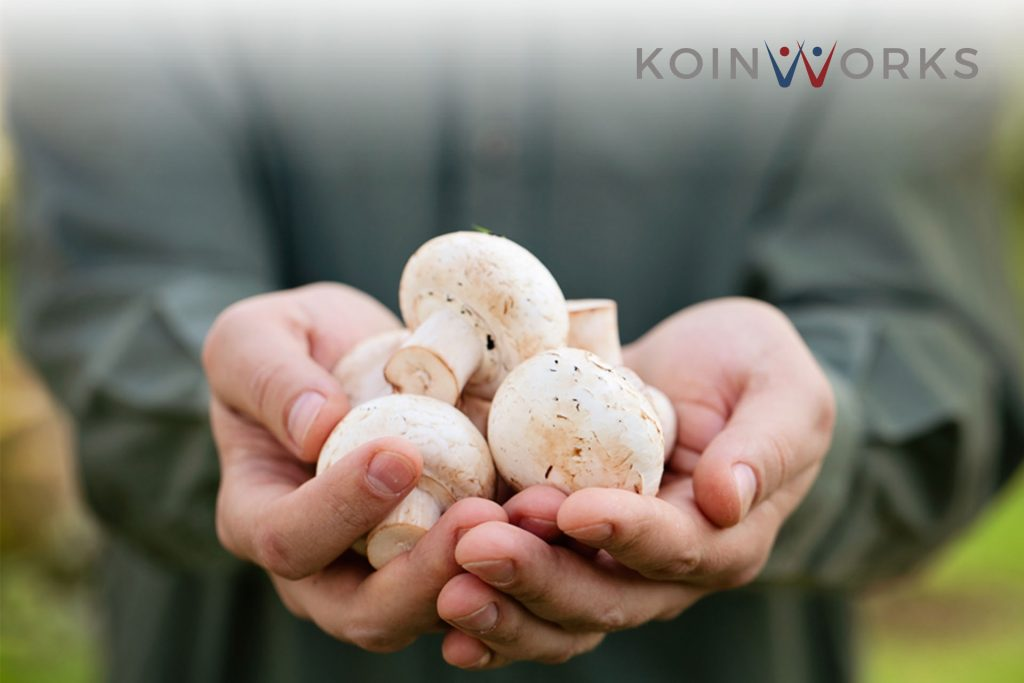 budidaya tanaman - jamur - mushroom farm