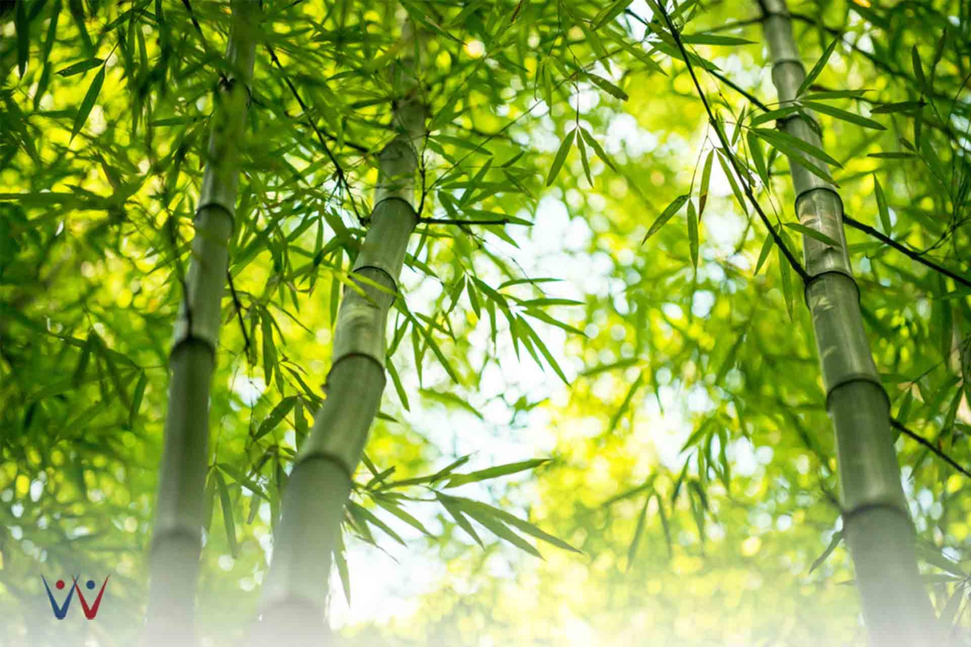 Berbisnis Menggunakan Filosofi Bambu